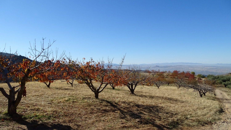 Wandelen in de Sierra Nevada